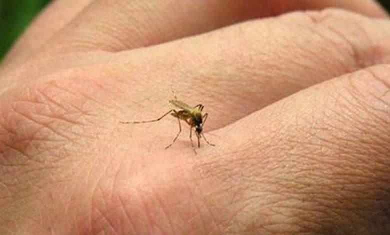 Cómo prevenir el Dengue y qué hacer en caso de síntomas en Ituzaingó 2