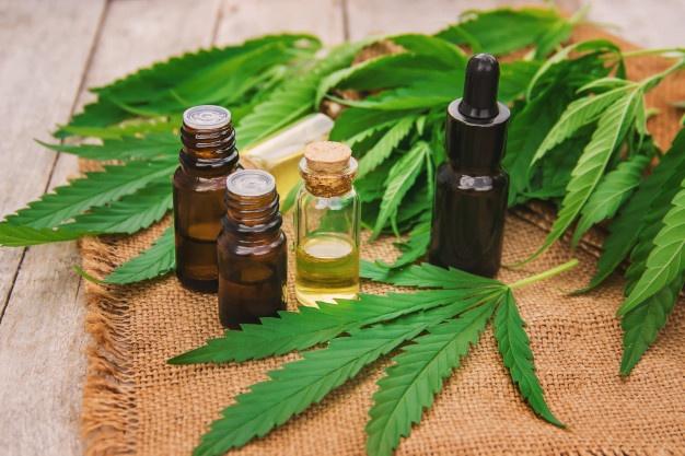 El gobieno creó un registro de usuarios de cannabis y fijó la cantidad de plantas permitidas para el autocultivo 3