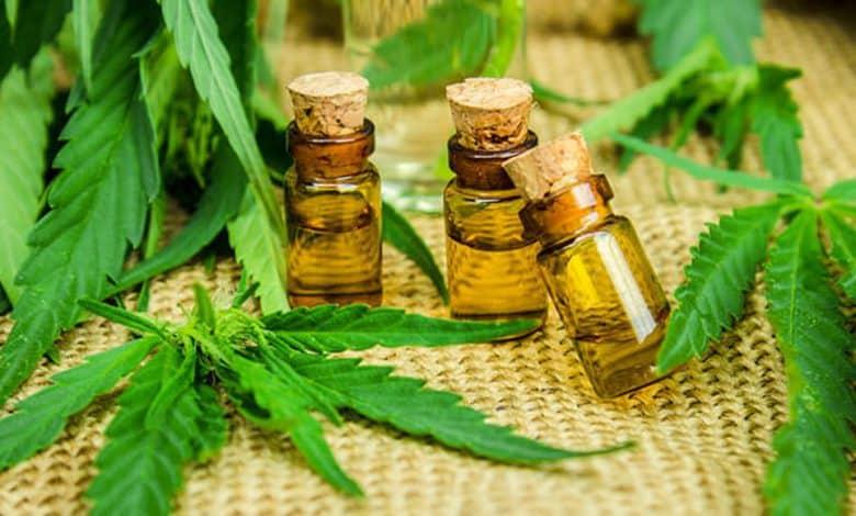 Abierto al público: Taller sobre el cannabis medicinal en el INTA 2