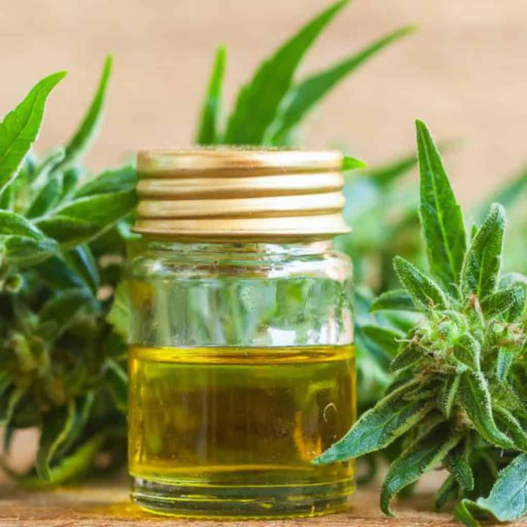 El gobieno creó un registro de usuarios de cannabis y fijó la cantidad de plantas permitidas para el autocultivo 2