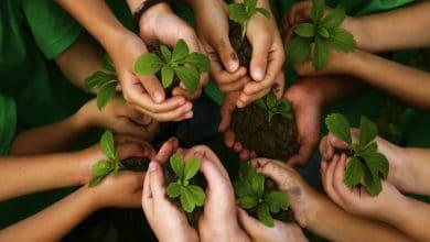 Diputados busca debatir en sesión extraordinaria la Ley de Educación Ambiental 12