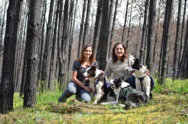 ¡Historias Insólitas! Perros replantan bosques quemados en Chile 3