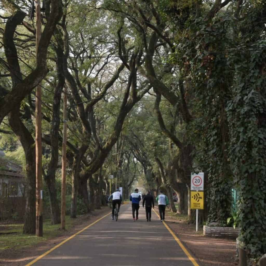 Ituzaingó promueve la incrementación del arbolado urbano 2