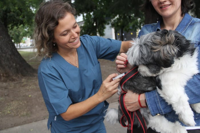 Ituzaingó: Vacunación antirrábica gratuita en zoonosis 1