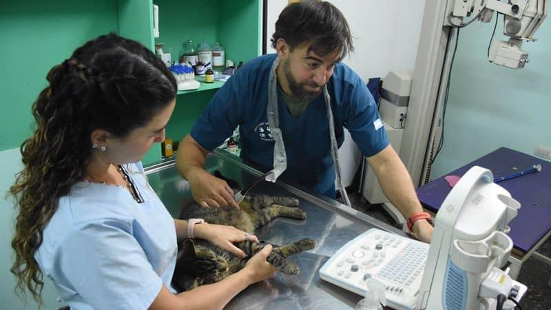Morón: lanzan campaña de firmas para la creación de un hospital público veterinario 2