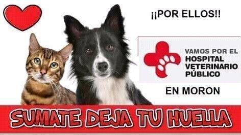 Morón: lanzan campaña de firmas para la creación de un hospital público veterinario 3